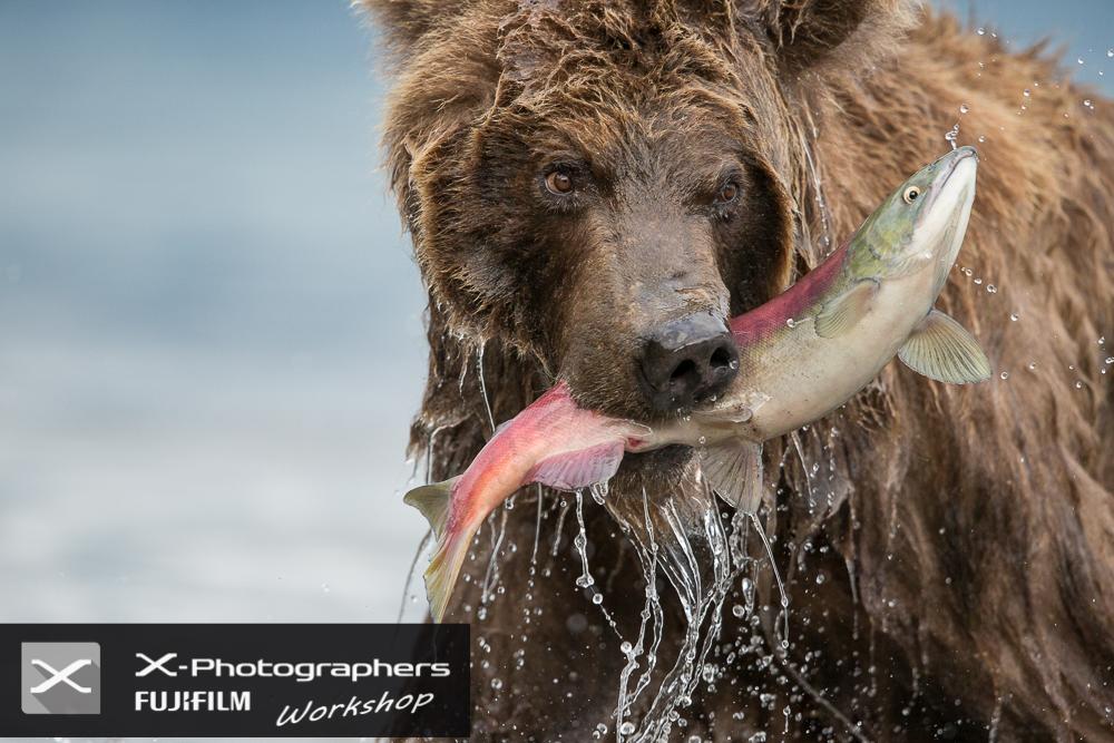 marco urso copyright-1000